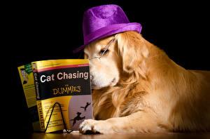 Картинка Собаки Ретривера Книги Шляпы На черном фоне Животное Животные Юмор
