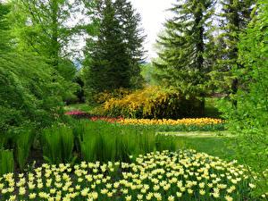 Картинка Словения Парки Тюльпаны Ели Дерева Mozirski gaj Природа