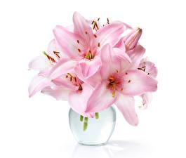 Обои Лилии Крупным планом Розовый Белый фон Цветы