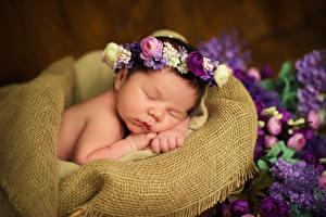 Картинки Сирень Роза Младенца Спящий Дети