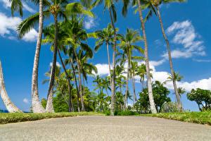 Фотография Парки Тропики Небо Гавайи Пальмы Природа