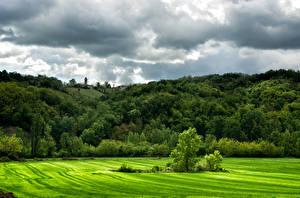 Фотографии Италия Леса Луга Облака Деревья Lugagnano Val d'Arda Природа