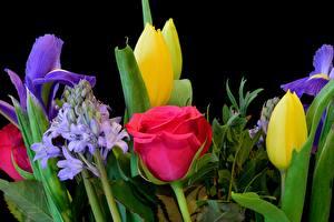 Фотографии Розы Тюльпаны Черный фон Цветы