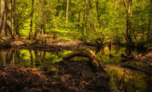 Фотография Лес Ствол дерева Болоте