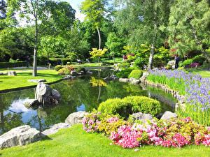 Фото Англия Парки Пруд Ирисы Лондон Деревьев Кусты Holland Park Природа