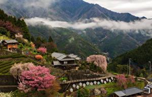 Фото Япония Здания Горы Цветущие деревья Поля Тумане Kochi город