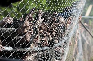 Обои Зомби Ходячие мертвецы Забор Руки Фильмы фото
