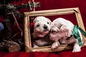 Картинки Собаки Щенков Двое Бантики животное