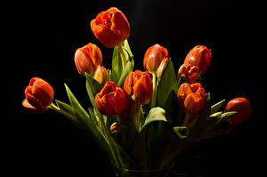 Картинка Тюльпаны Красных Черный фон Цветы