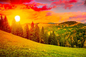 Обои Украина Пейзаж Рассветы и закаты Горы Карпаты Ель Солнце Трава