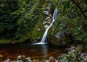 Картинка Новая Зеландия Водопады Мох Hokitika