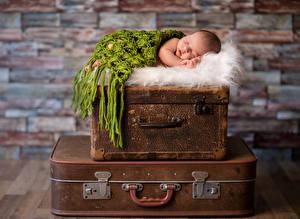 Фотографии Младенцы Спит Чемодан ребёнок