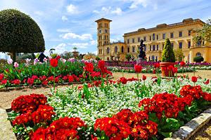 Фотография Великобритания Здания Тюльпаны Бегония Особняк Osborne House Queen Victoria's residence Города
