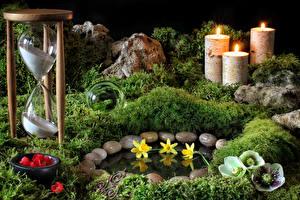 Обои Морозник Нарциссы Свечи Камень Физиотерапия Мха
