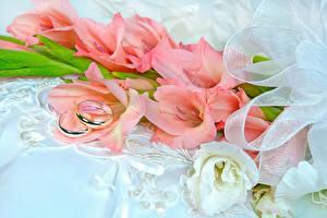 Фотографии Букеты Гладиолусы Кольцо Вдвоем Цветы