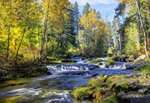 Фотография Речка Водопады Леса Деревья