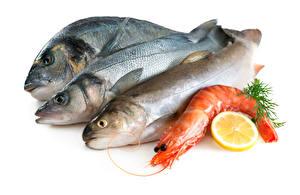 Фото Морепродукты Рыба Креветки Лимоны Белый фон