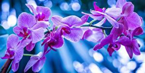Обои Орхидеи Крупным планом Ветки Цветы фото