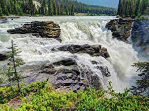 Фото Штаты Водопады Леса Парки Скала Джаспер парк Athabasca Falls Природа