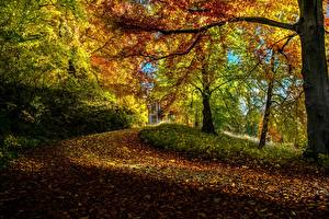 Обои Осень Деревья Ветки Листья Природа фото