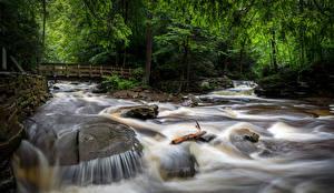 Фото США Парки Водопады Мосты Деревья Ricketts Glen State Park