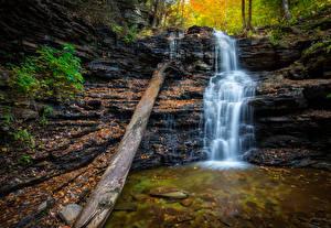 Обои США Парки Водопады Осень Ствол дерева Ricketts Glen Fall Природа фото