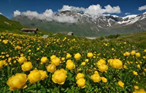 Картинка Франция Пейзаж Горы Лютик Альп Облака Природа Цветы