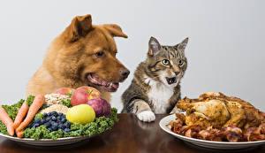 Обои для рабочего стола Собаки Коты Курица запеченная Фрукты Овощи Тарелка Животные