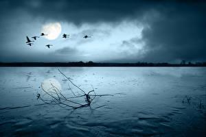 Фото Реки Небо Птицы Ночь Луна Природа