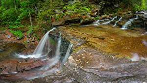 Фото Штаты Парки Водопады Мох Reyolds Falls Ricketts Glen State Park