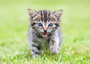 Обои Коты Котята Трава Животные