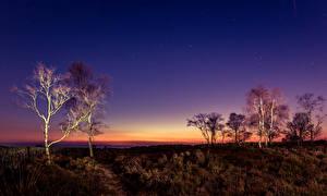 Фотография Небо Звезды Великобритания Дерева Peak District
