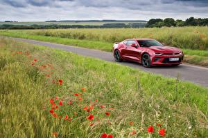 Обои Шевроле Поля Маки Дороги Красных Металлик 2016 Camaro автомобиль Природа