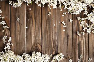Обои Цветущие деревья Лепестки Доски Цветы