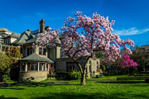 Фото Канада Здания Цветущие деревья Ванкувер Трава Города