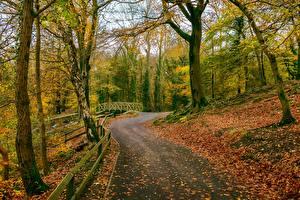 Обои Осень Дороги Великобритания Парки Деревья Gnoll Estate Country Park Neath south Wales Природа фото