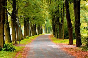 Фотографии Осенние Парки Тротуар Деревья Аллея Природа