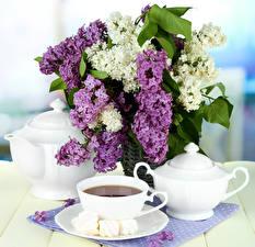 Обои Натюрморт Сирень Чай Чайник Чашка Цветы фото