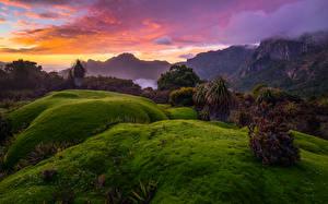 Фотографии Австралия Пейзаж Горы Рассветы и закаты Мох Tasmania Природа