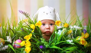Обои Тюльпаны Младенцы Трава Взгляд Яйца Дети фото