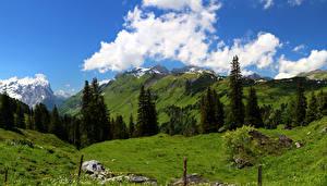 Обои для рабочего стола Швейцария Горы Небо Пейзаж Альпы Облако Ель Траве Природа