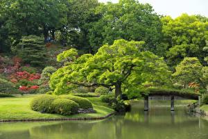 Фотографии Сады Пруд Токио Япония Деревья Rikugien Garden Природа