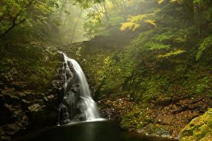 Обои Водопады Леса Осень Мох Природа фото