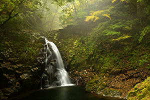 Картинки Водопады Леса Осень Мох Природа