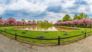 Картинка Берлин Германия Парки Пруд Цветущие деревья Небо Природа