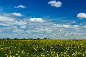 Обои Поля Небо Одуванчики Облака Природа фото