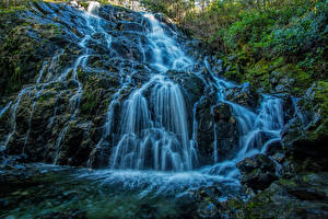 Фотографии Канада Водопады Мох Peden Lake Mary Vine Creek Vancouver Island Природа
