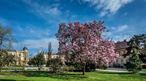 Фотография Хорватия Цветущие деревья Здания Загреб Магнолия Кустов Газоне город
