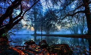 Обои Англия Реки Осень Лондон Деревья Туман Ветки Morden Hall Park Природа фото