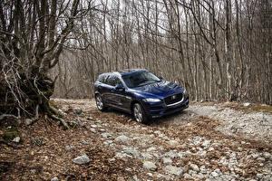 Картинки Ягуар Синий Металлик 2016 F-Pace Portfolio автомобиль